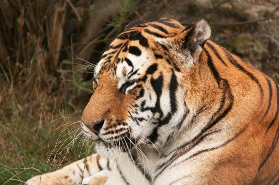 """Shutterstock"" nuotr./Tigras"