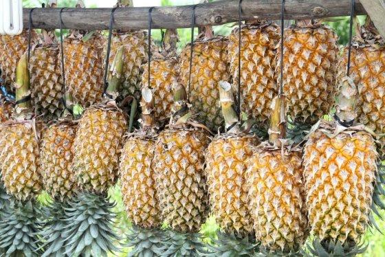 Evelinos ir Karolio nuotr./Pigūs pakaruokliai ananasai šalia kelio