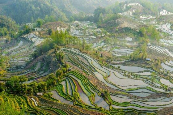 Fotolia nuotr./Ryžių laukai, Kinija