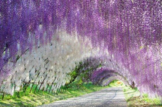 Fotolia nuotr./Žiedų tunelis, Japonija