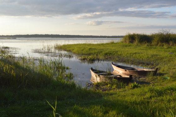 Žuvinto biosferos rezervate skaičiuojma šimtai gervių