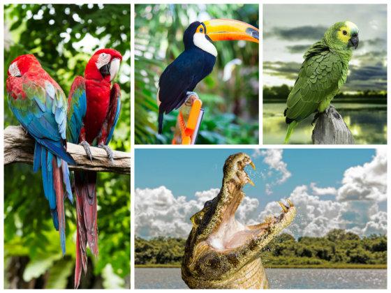 Fotolia nuotr./Nuostabi Brazilijos gyvūnija