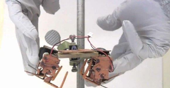 Biologai atskleidė, kodėl nepavyksta išnaikinti tarakonų