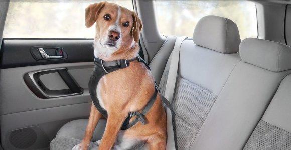 Šunų savininkai – ar jie rūpinasi tik šuns, ar ir savo sveikata?