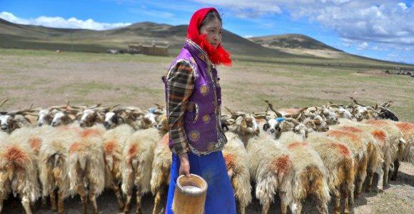 Aukštai kalnuose gyvenančių tibetiečių paslaptis – iš jau išnykusių protėvių paveldėtas genas