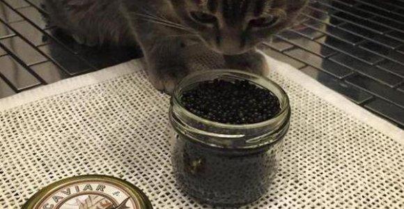 Maskvos Visuomenės rūmų deputatė Julija Alferova savo katiną šėrė juodaisiais ikrais