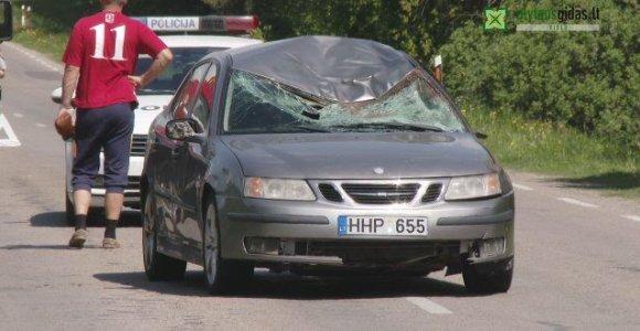 Alytaus rajone į kelią išlėkusiam briedžiui SAAB smūgis buvo mirtinas