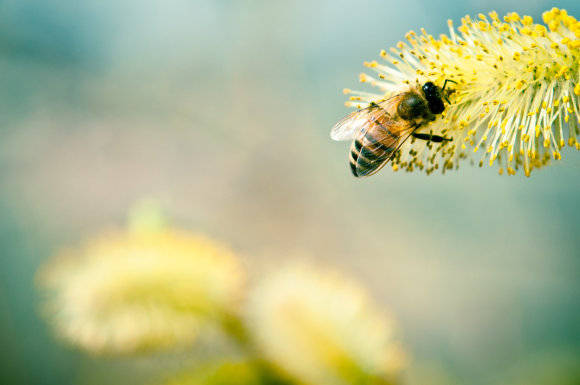 Shutterstock nuotr./Bitė