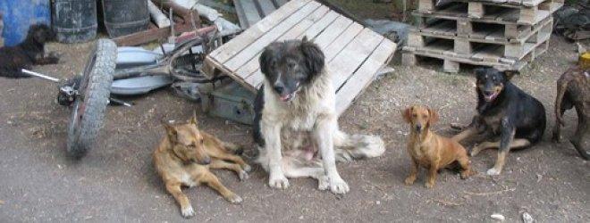 Karas prislėgė ir gyvūnus: iš Donecko bėgantys žmonės palieka šimtus šunų ir kačių