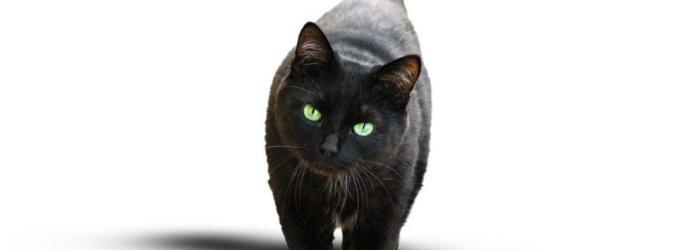 Budapešte per Heloviną juodos katės saugomos nuo satanistų