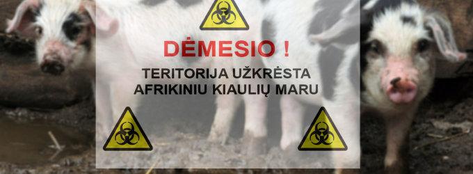 Rokiškio rajono ūkyje nustatytas afrikinio kiaulių maro židinys
