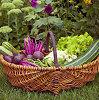 Daržovių, bulvių, uogų ir vaisių augintojams – europinės išmokos
